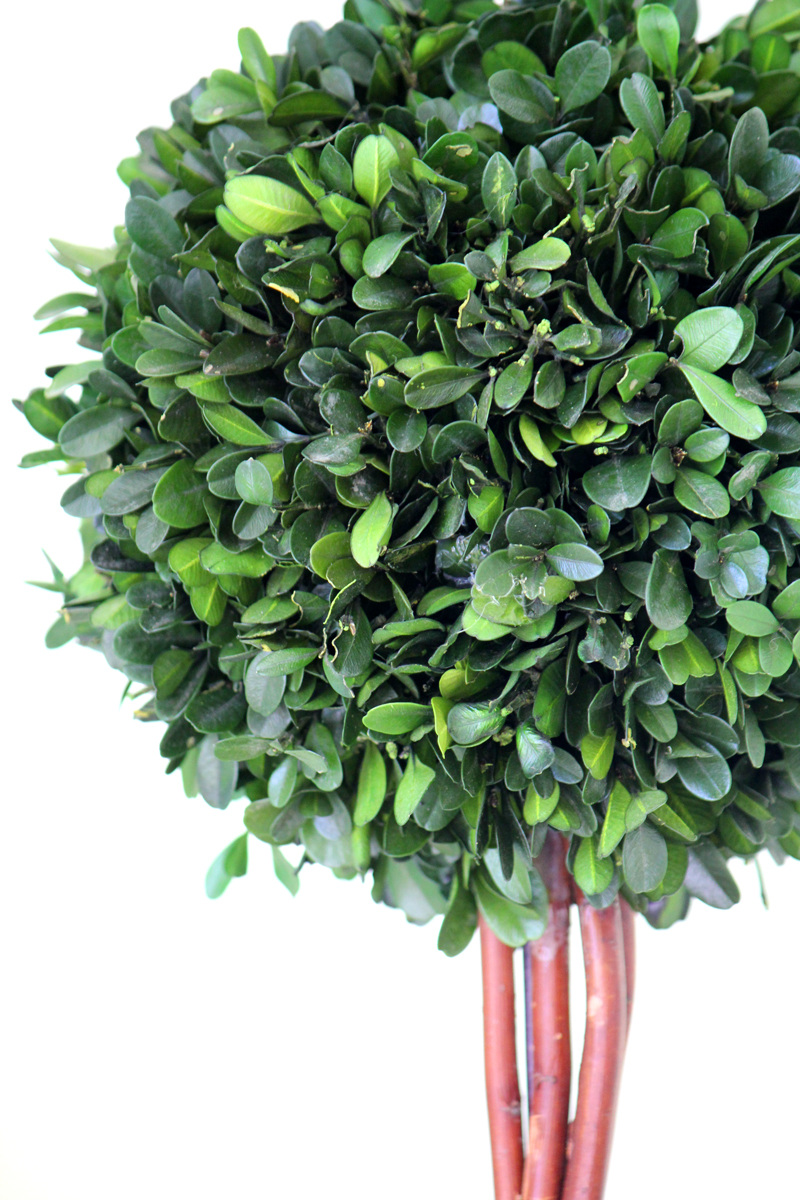 BOXWOOD-TOPIARY-2-WEB.jpg