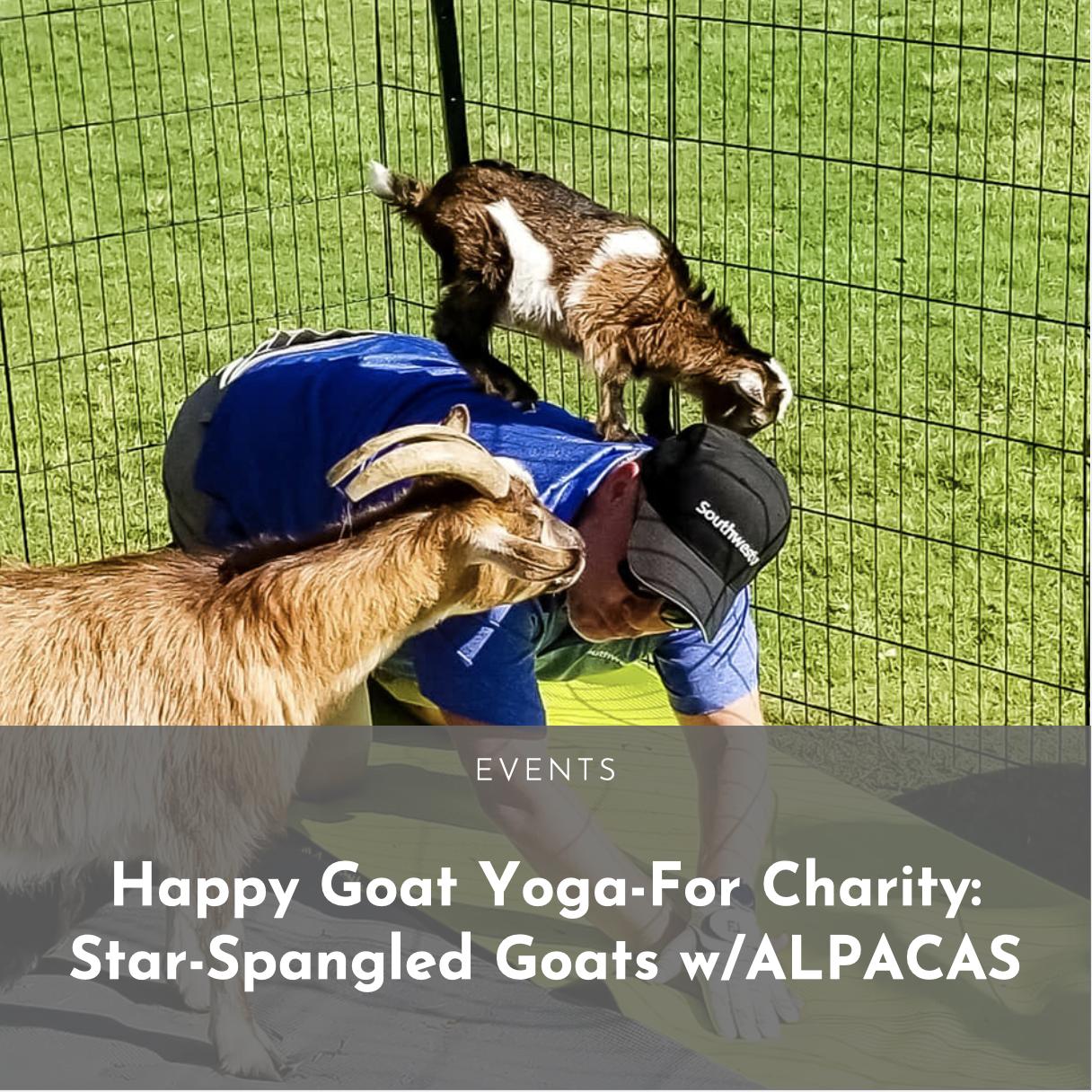 Happy Goat Yoga For Charity Star Spangled Goats W Alpacas Dallasites101