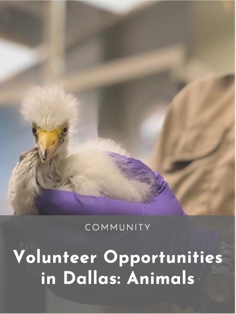 Volunteer Opportunities in Dallas: Animals — Dallasites101