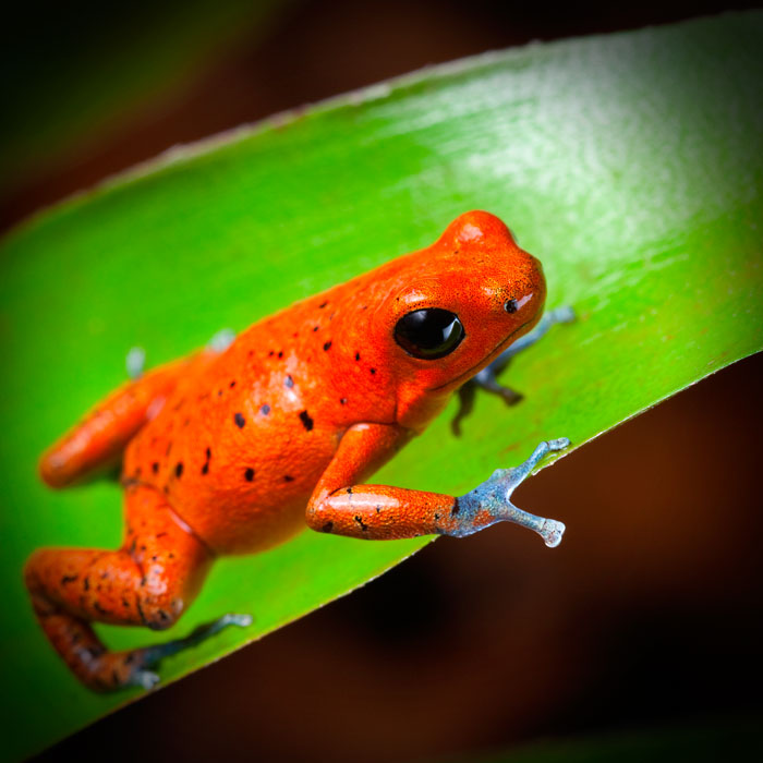Galeria-Biodiversidad-rana-roja-700x700.jpg