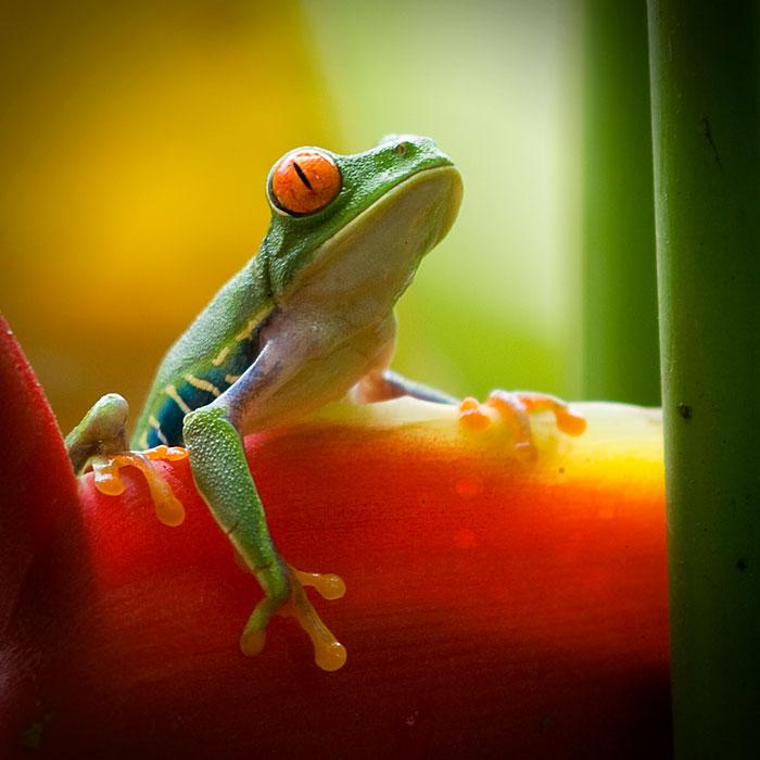 Galeria-Biodiversidad-rana-verde-700x700.jpg