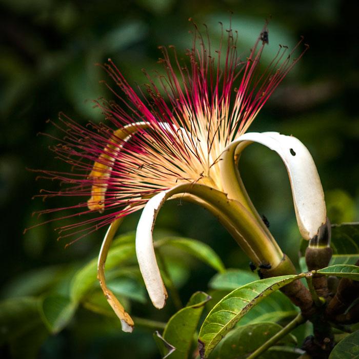 Galeria-Biodiversidad-flor-700x700.jpg