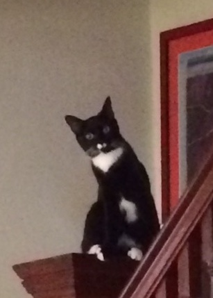 She calls this: What Cat on the Newel Post?