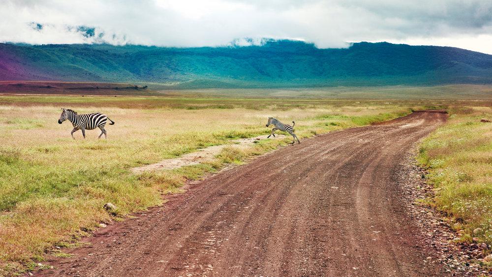 Zebras_Tanzania.jpg