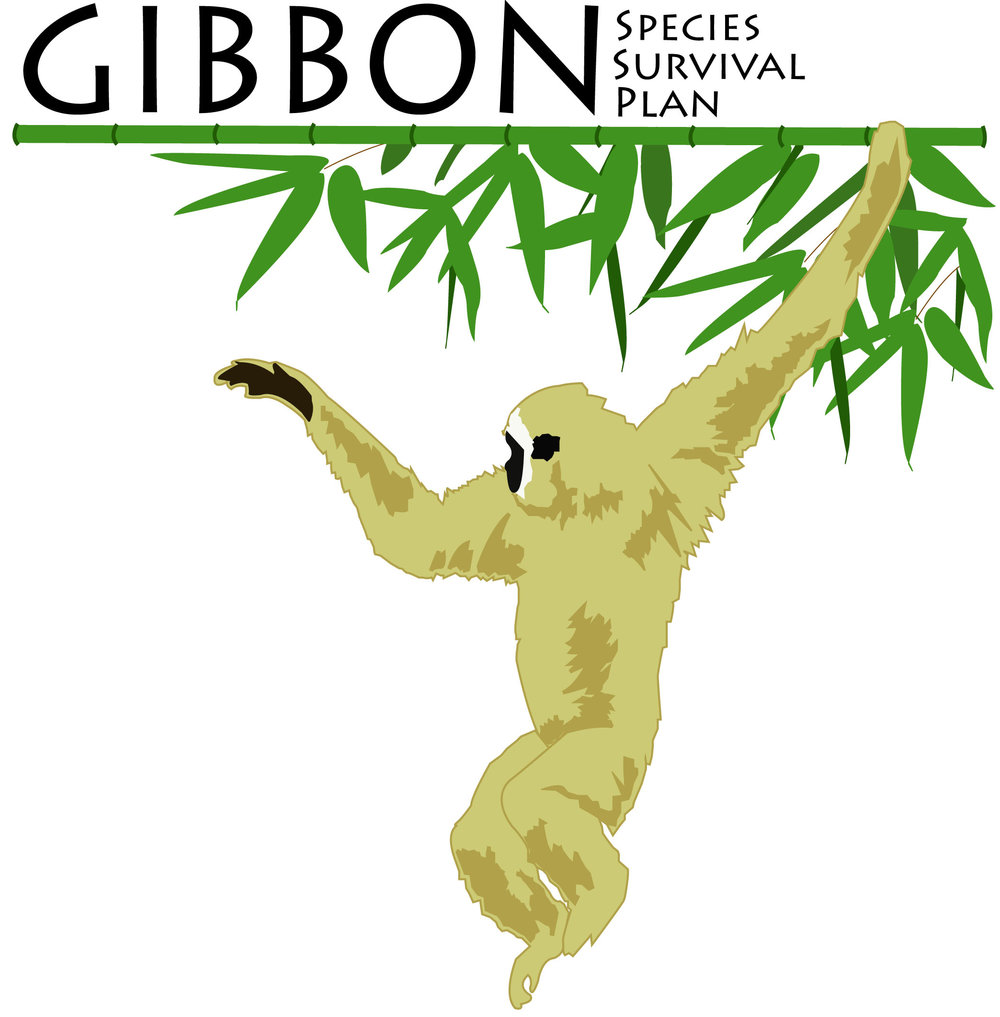 Gibbon SSP.jpg