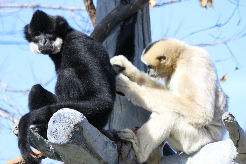 Grooming, Denver Zoo