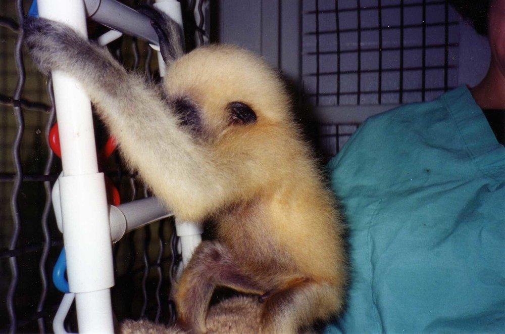 103 Gibbon003.jpg