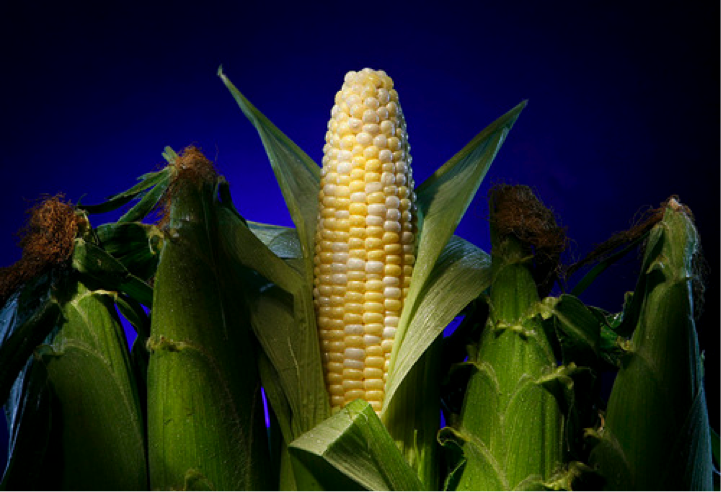 corn in husk.png