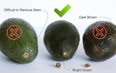 avocado5.png