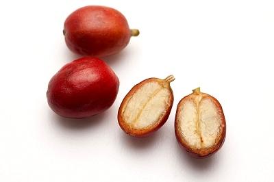 inside coffee cherry.jpg