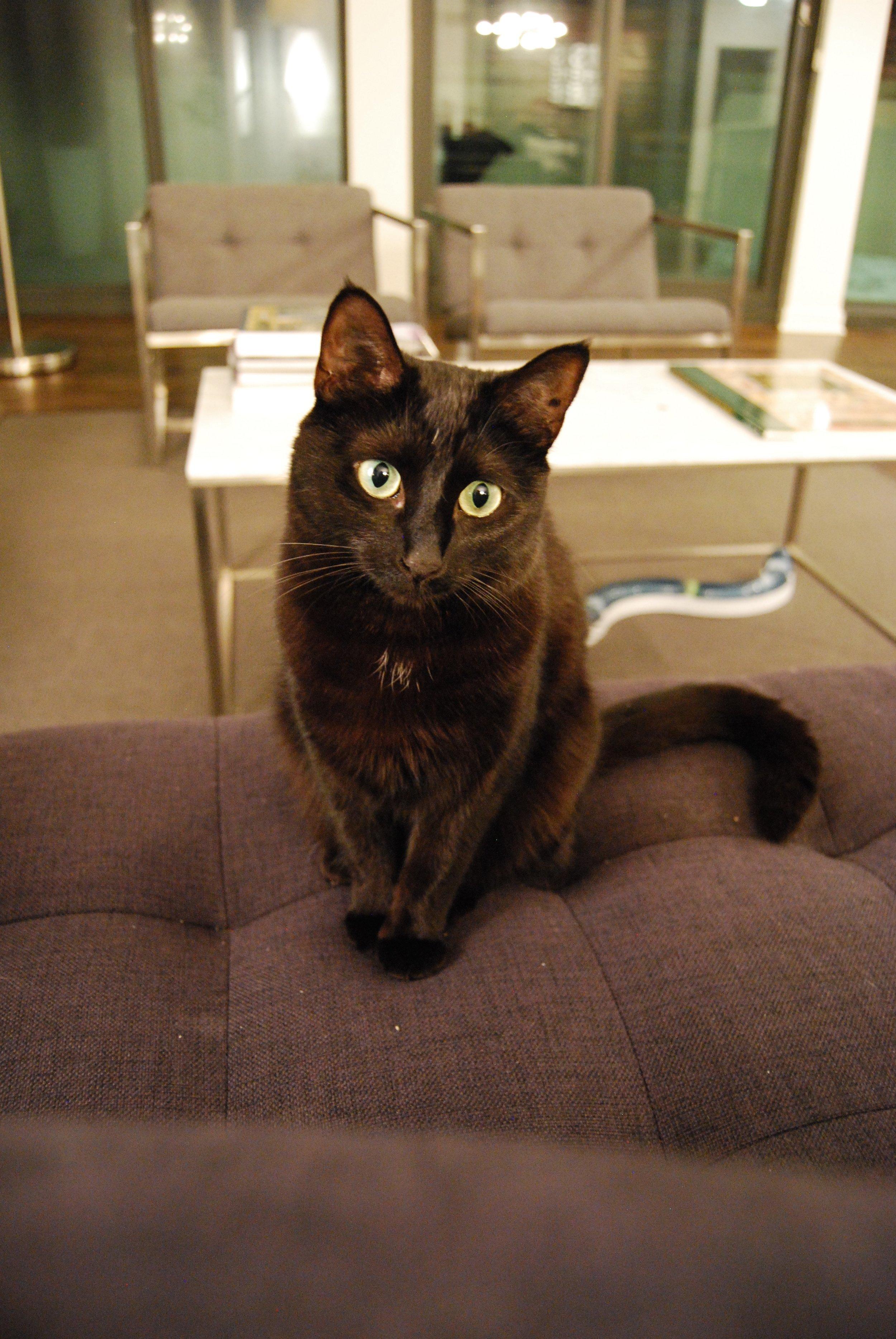 Lucy cutie cat