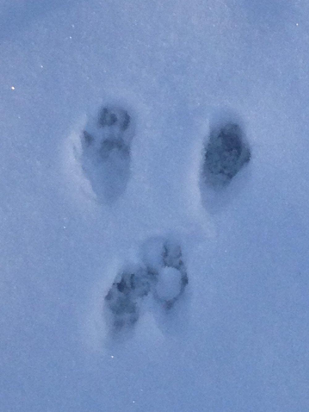 Yestonature-snowprints.jpg