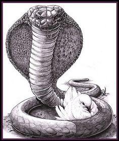 1e90789321678b21ff530d311cb69233--matthew--snake-tattoo.jpg