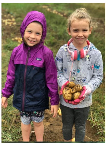 children harvestin potatoes 2018.PNG