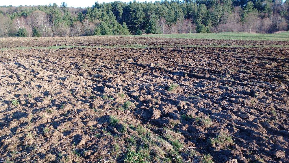 Plowing 3.jpg