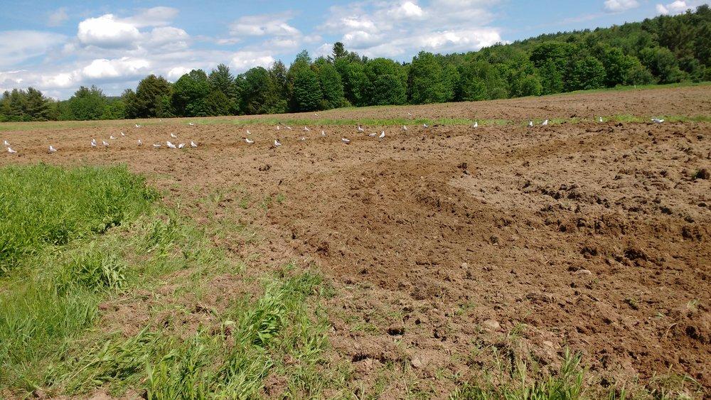 Plowing 2.jpg