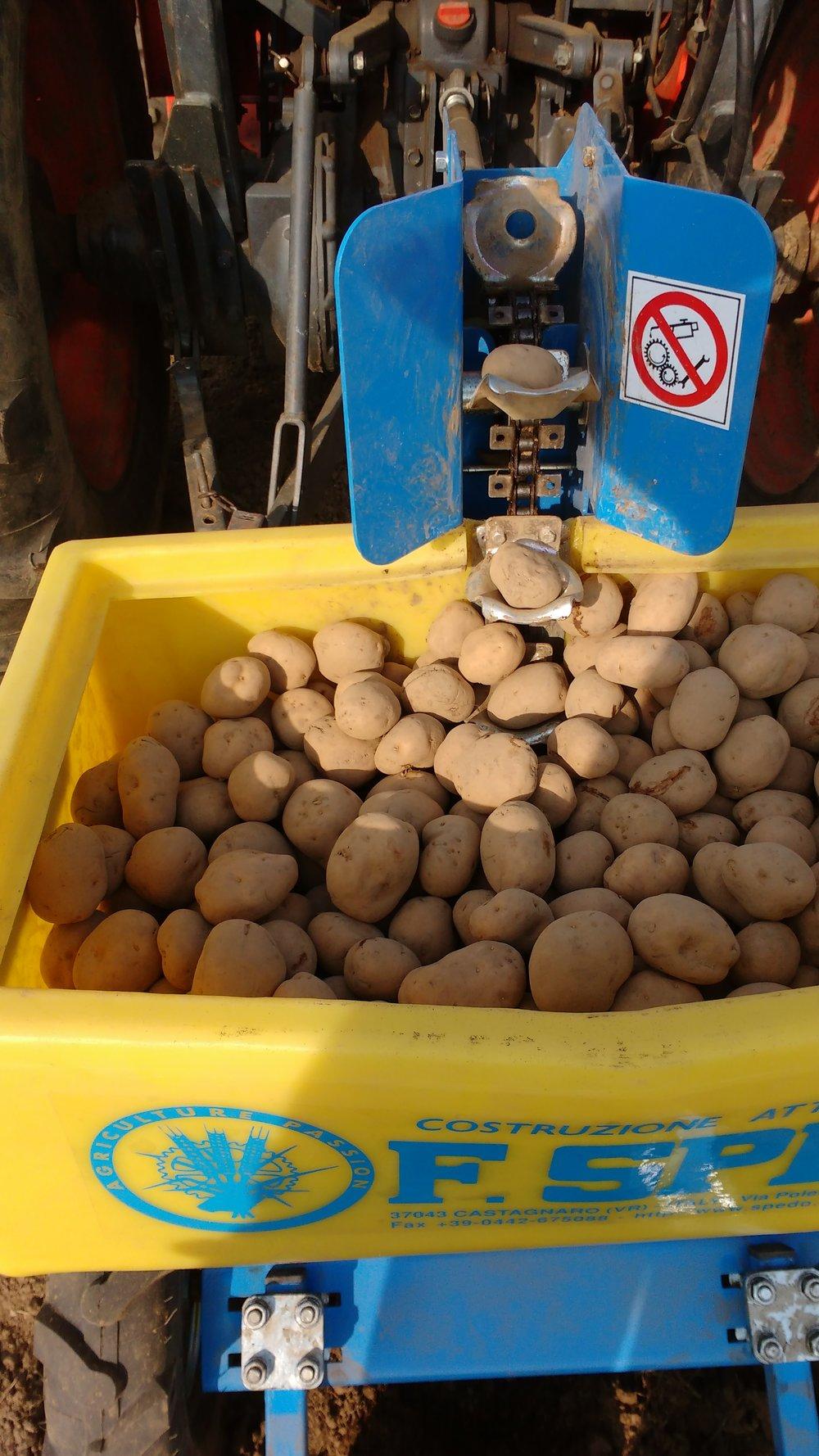 Potato transplanter.jpg