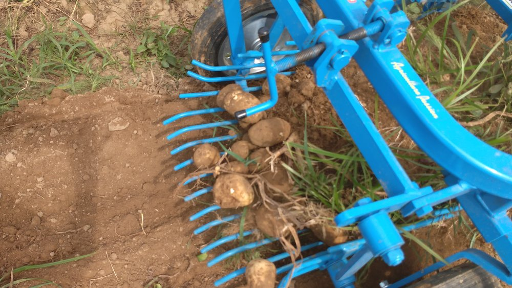 Potato digger.jpg