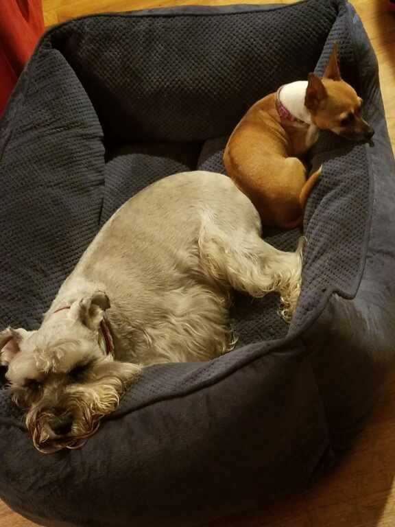 Jasper and Mylie share at bedtime