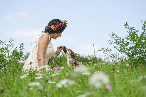 wedding pet chaperones