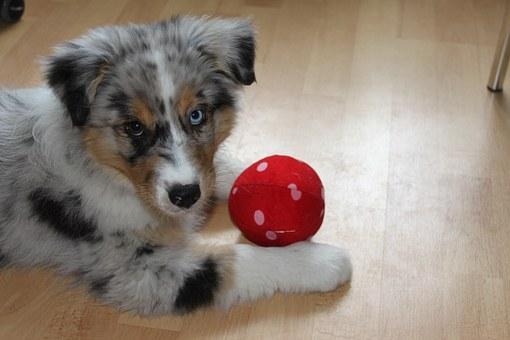 blog.jpgmale dog names