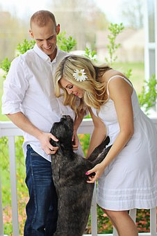 wedding pet care
