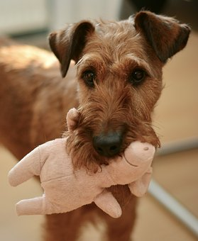 puppy toy.jpg