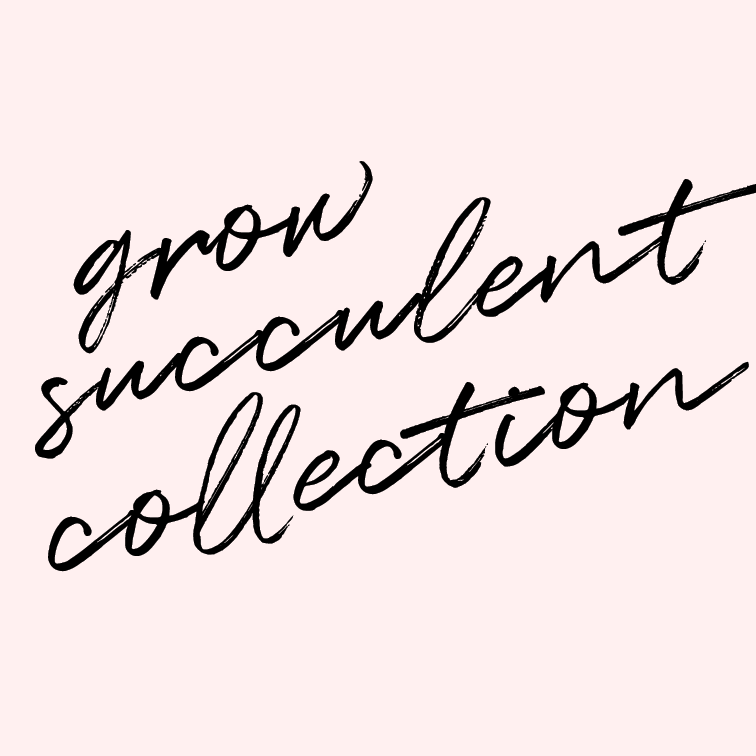 Grow a succulent collection.   I don't know that I can keep normal plants alive inside our apartment, so I'll start with succulents. Let's see if I can make this work.