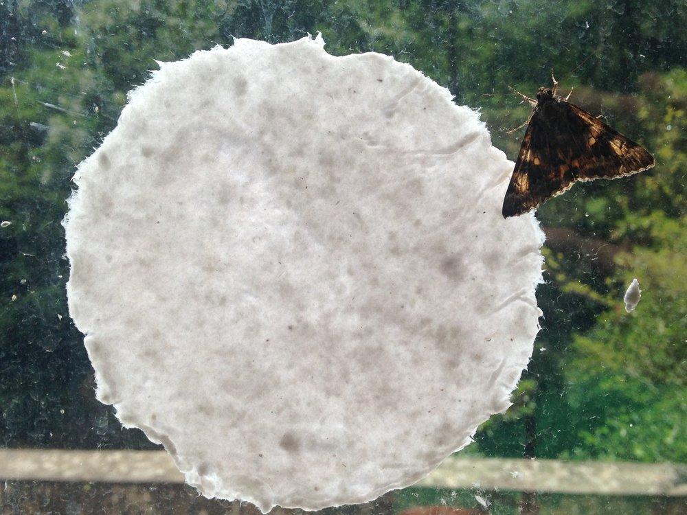 paper & moth.jpg