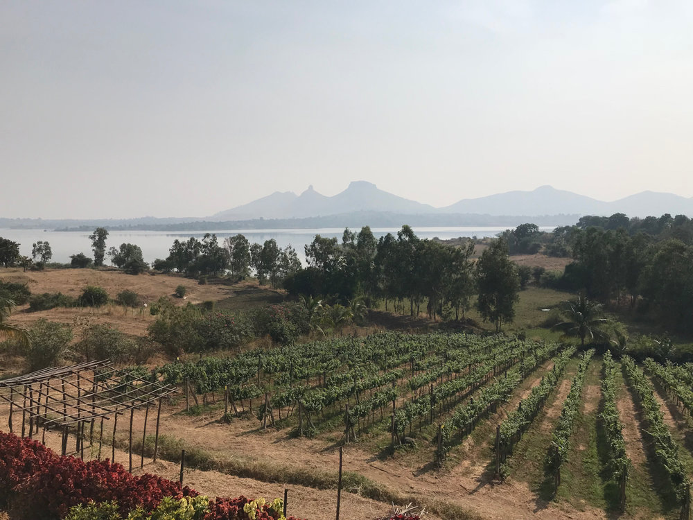 Elevation and large bodies of water help moderate the hot climate of India's vineyards.