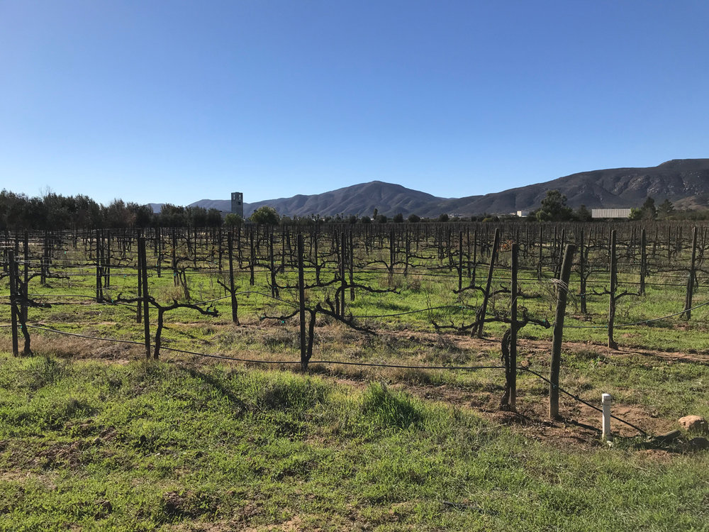 Just another gorgeous day in Baja wine country..