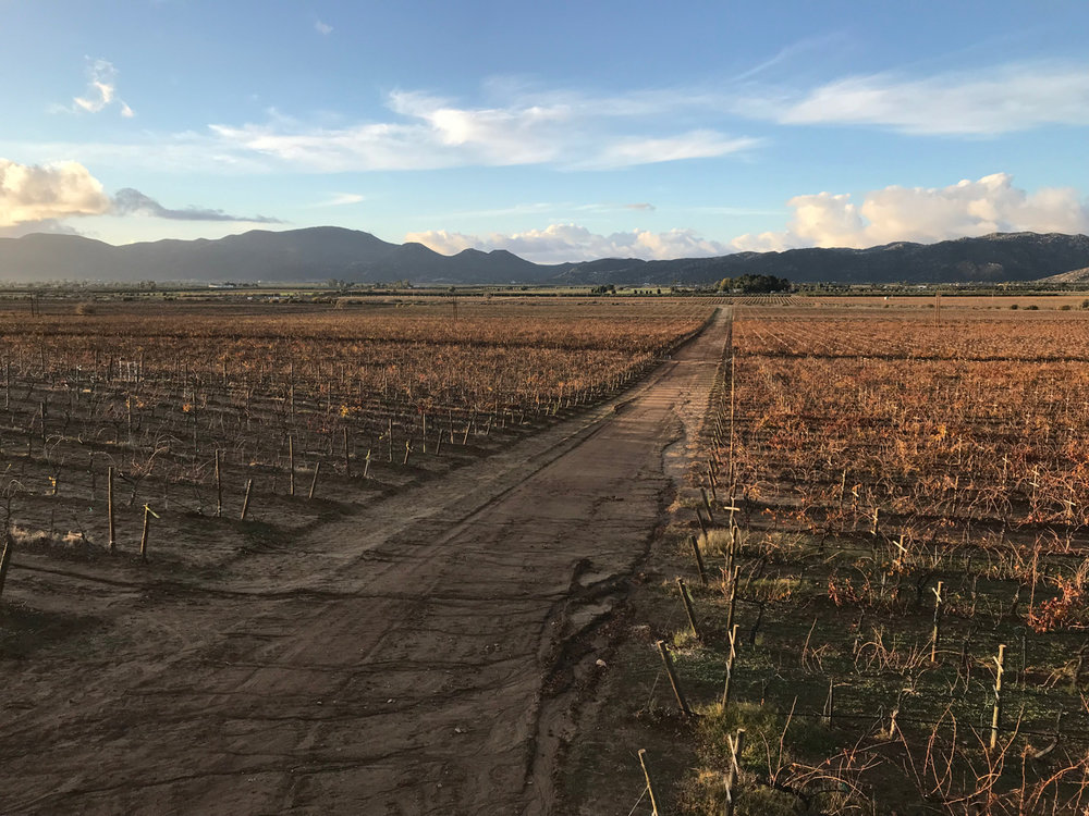 This very lovely vista behind Museo del Vino awaits you in Valle de GUADalupe.
