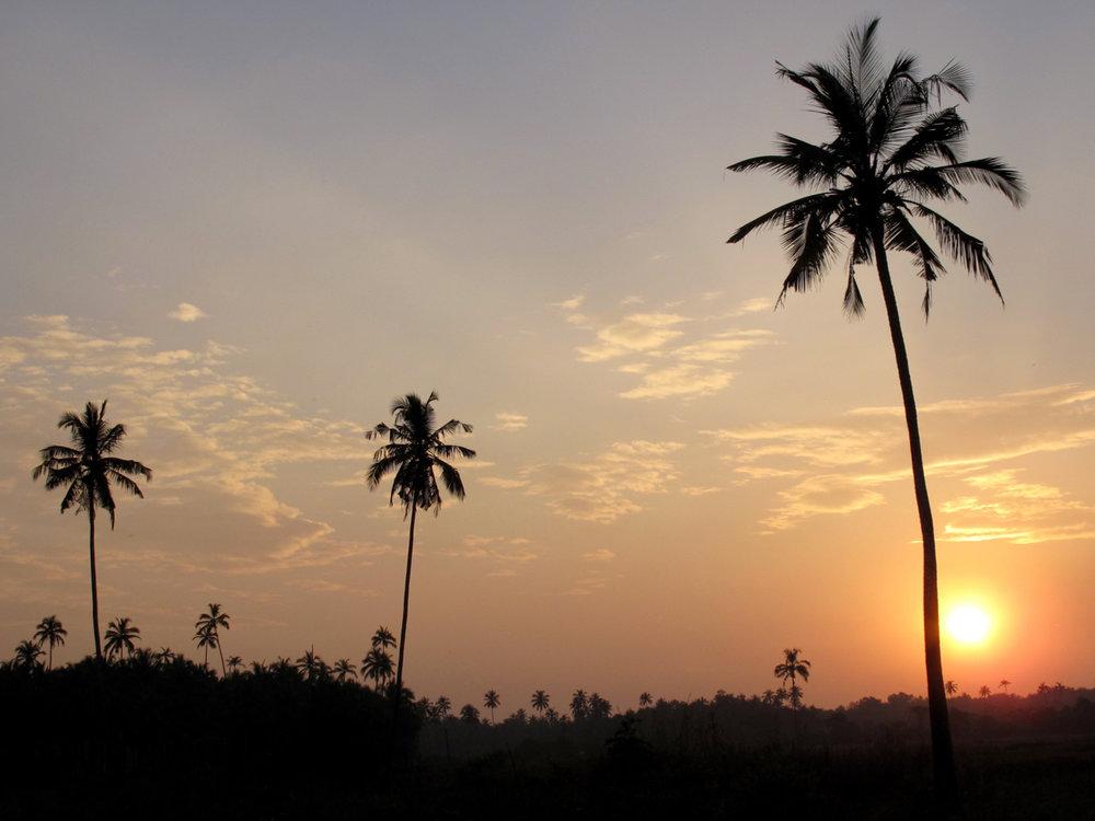 Goa-trees.jpg