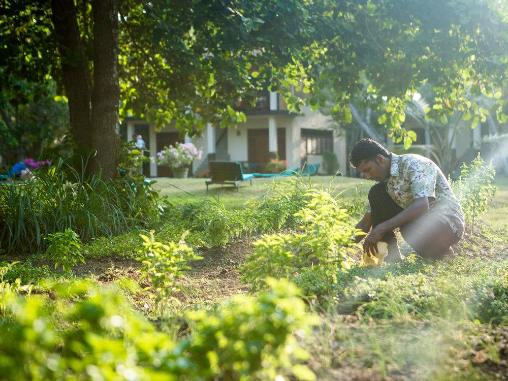 sri-lanka-gardening.jpg