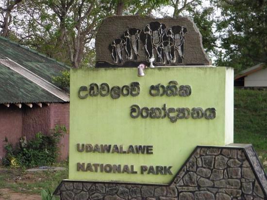 udawalawe-national-park.jpg
