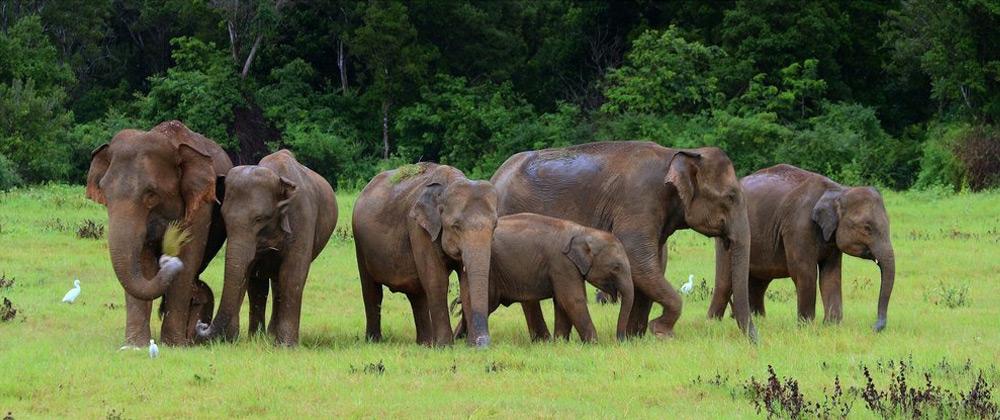 Yoga Explorers yoga retreat to Sri Lanka - elephant watching at Yala