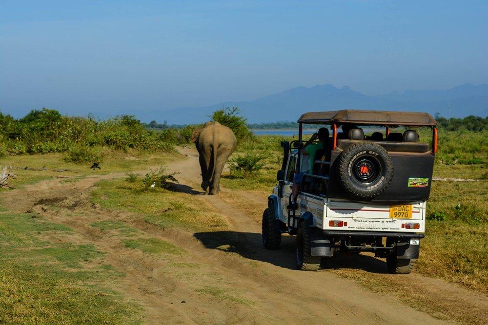 Elephant safari at Udawelawe