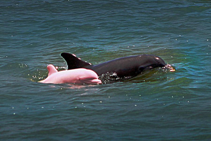 pink dolphin.jpg