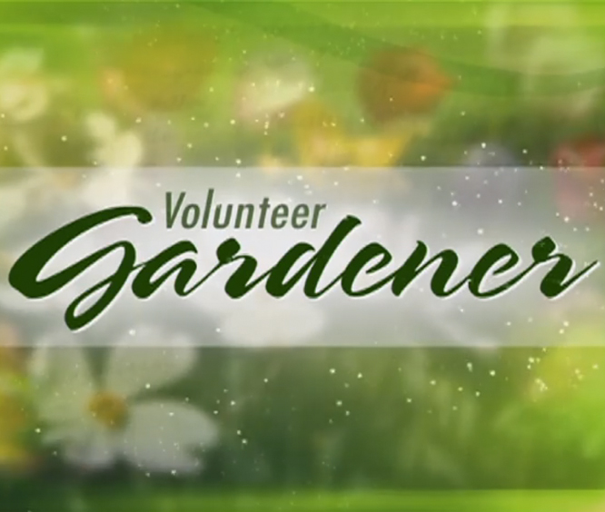 Volunteer Gardener - Phillipe Chadwhick Watch a video from our feature on the PBS show Volunteer Gardener