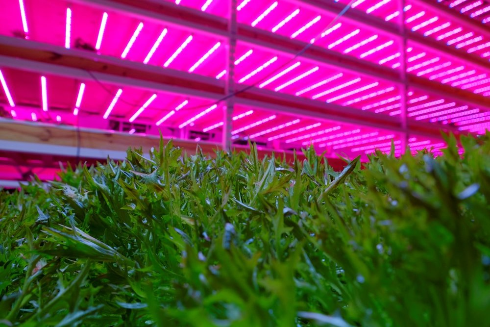 Indoor Farm LED Lights