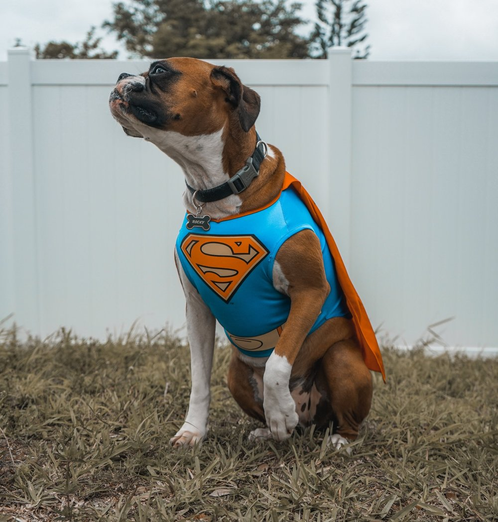 How to get rid of the scourge of hackers? We need a hero dog. Photo by  Elias Castillo  on  Unsplash