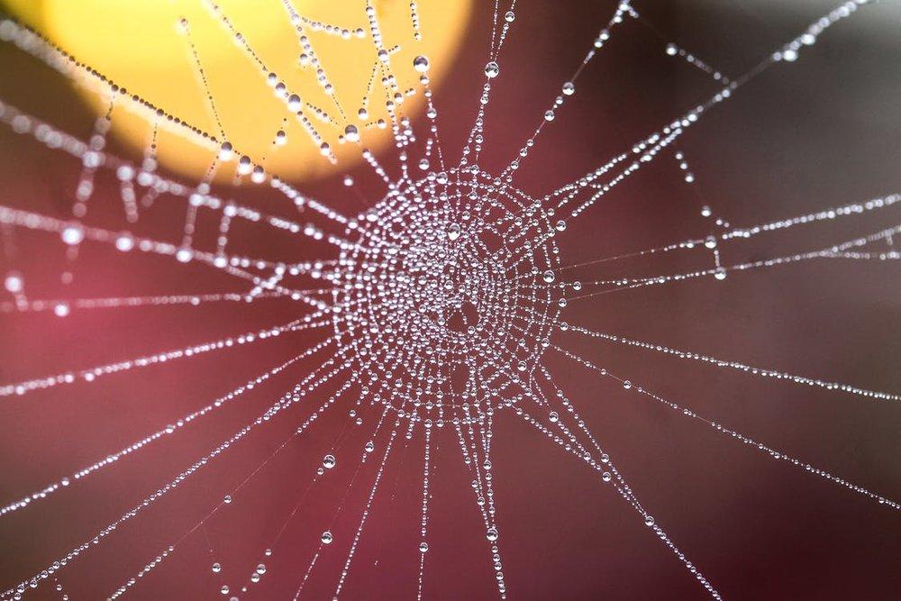 World Wild Women Web - Selbstermächtigung. Das göttlich-feminine Prinzip verkörpern, Hier und Jetzt. Gemeinsam - Frau-Sein. Globale und lokale Treffen und Sharings.
