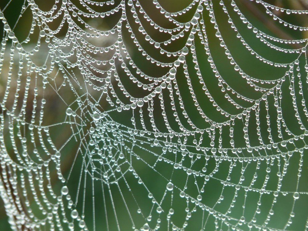 Weaving the web. Like Mother Spider - Conscious Global Connection & Caring