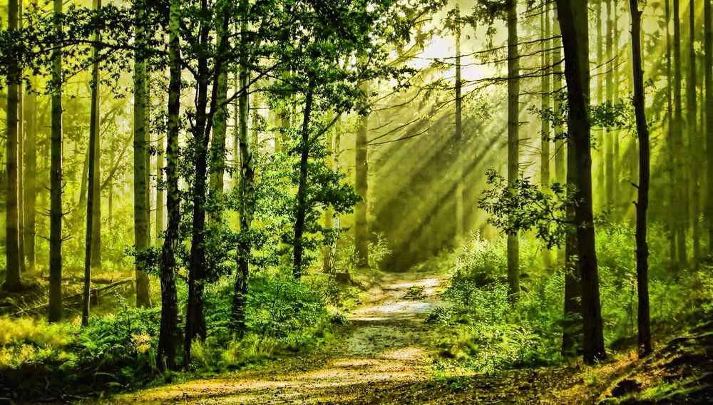 Supported by the power of the Earth and the network of the trees. - Deeply rooted, interconnected and expanding toward the light, branches touching