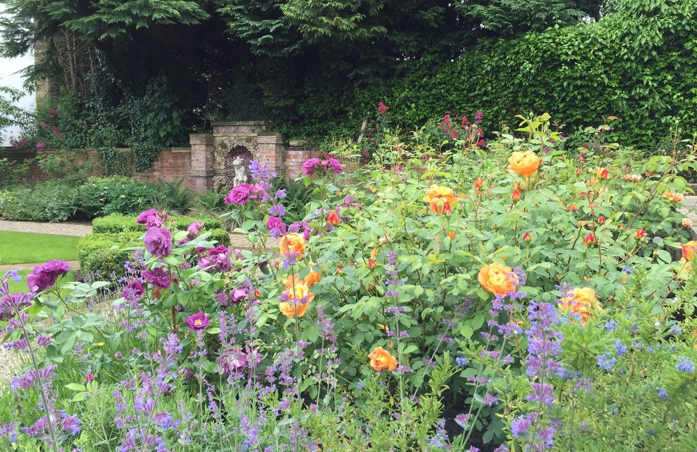 Rose border (David Austin cream and peachy colours: Rosa Woolerton Old Hall; Rosa Lichfield Angel; R. Lady of Shallot and R. Lady Hamilton. Purple: Rosa Rhapsody in Blue).