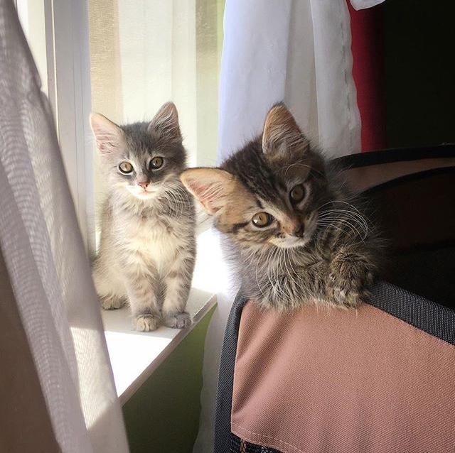 Rebecca Pet Services Cat Care In Home Sitter San Pablo California SF CA Bay Service