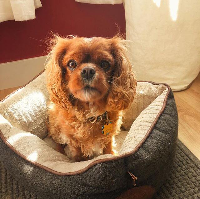 Rebecca Pet Services Dog Walker   In Home Sitter San Pablo California SF CA Bay Service