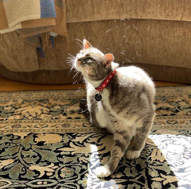 Rebecca Pet Services Cat Daycare In Home Sitter San Pablo California SF CA Bay Service