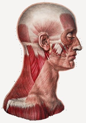 Head/Neck Surgery