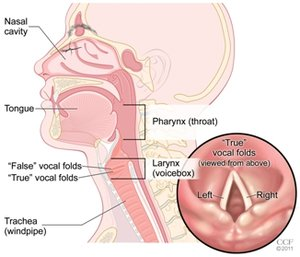 Throat & Voice